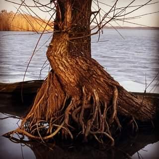 Ist möglicherweise ein Bild von Baum, Natur und See