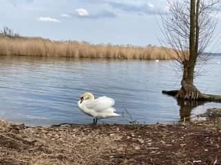 Ist möglicherweise ein Bild von Vogel, Natur und Gewässer
